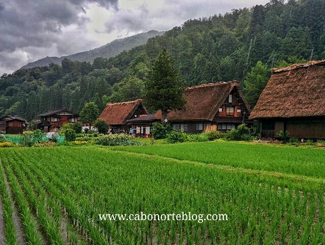 Campo de arroz y casas tradicionales en Shirakawago