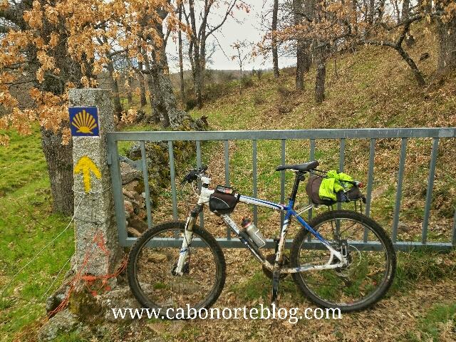 camino de santiago, camino sanabrés, cancela, bici, ganado