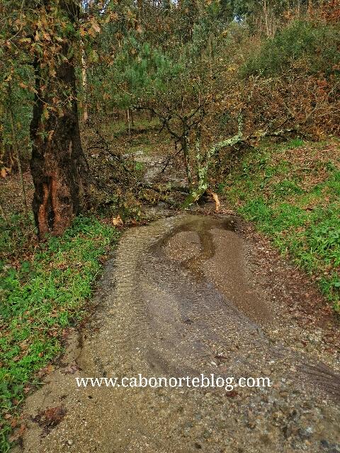 Árbol caído en el Camino en pleno invierno
