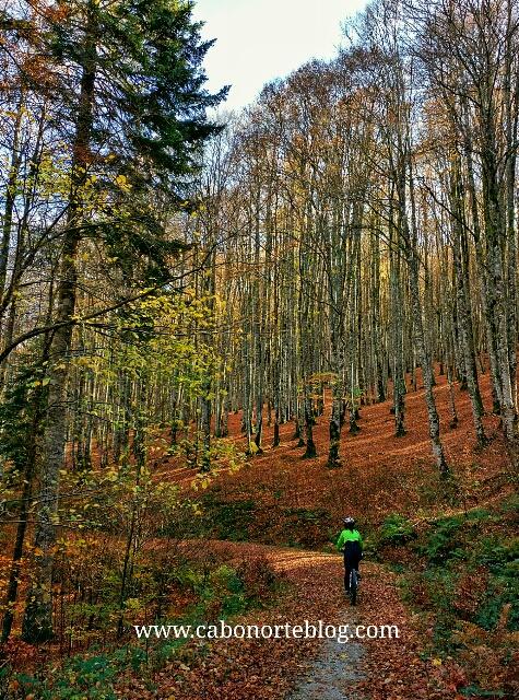 Selva de Irati en otoño, selva de irati, irati, bici, btt, hayedo, otoño