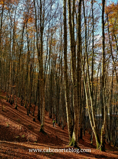 Bosque de hayas en Irati, selva de irati, irati, navarra