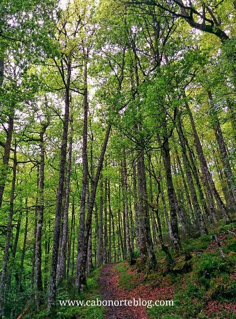 Ruta en Muniellos, asturias
