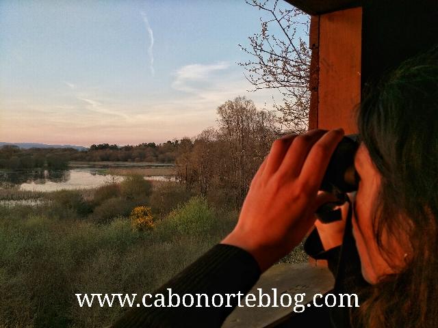 observatorio de aves