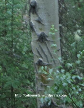 Marca de la zarpa de un oso en un árbol