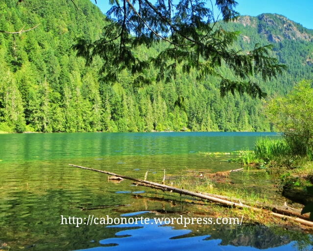 Bosques del interior de Isla Vancouver