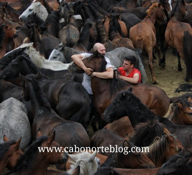Domando unha besta en Sabucedo