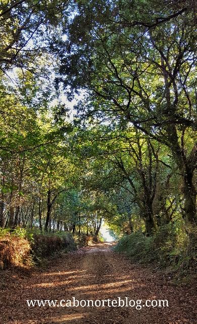 Camiño de Inverno por terras de Lalín
