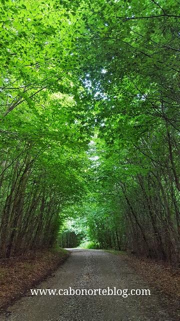 Bosque en la Isla de Als, Dinamarca
