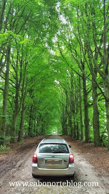 En los bosques de Holanda camino de Suecia