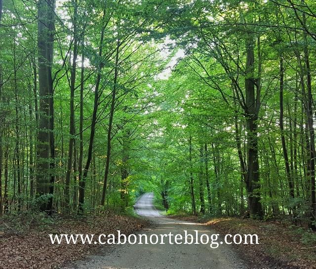 Carretera de tierra por un bosque de frondosas en Dinamarca