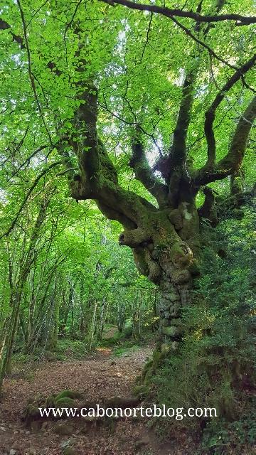 Bosque autóctono en los alrededores de El Espinal, en el Pirineo Navarro