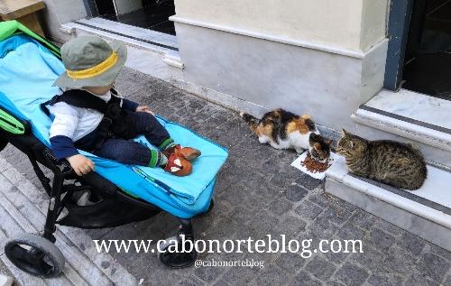 Gatos en las calles de Atenas