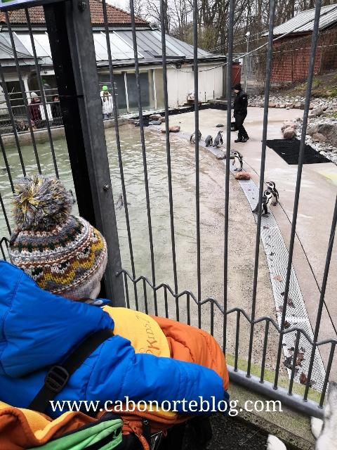 Viendo focas en Gotemburgo (Suecia)