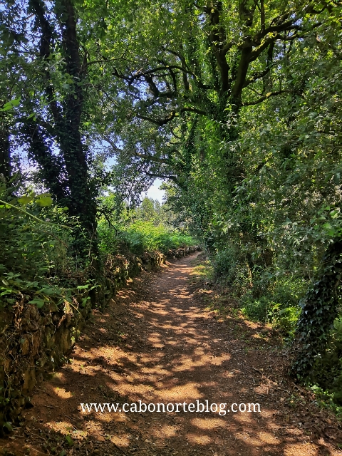 O camiño ten bastante sombra