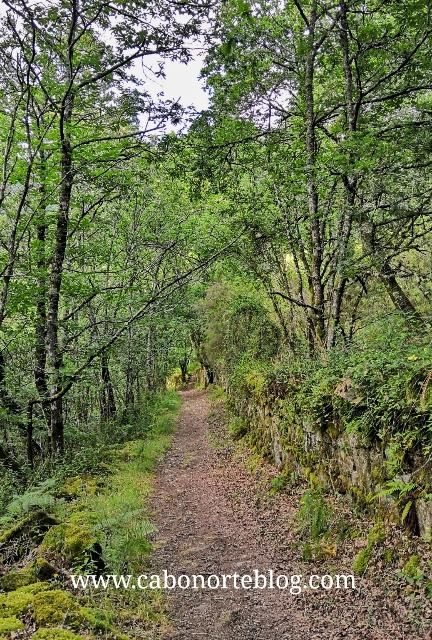 Ruta botánica en Carboeiro